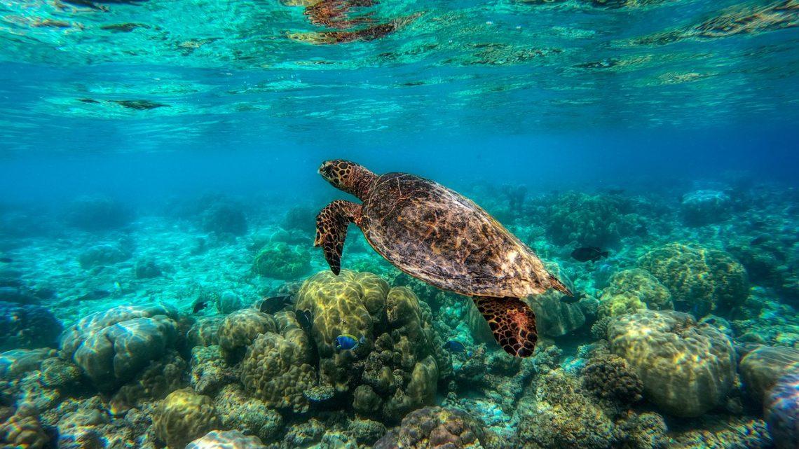 Protéger les récifs en tant que voyageur .