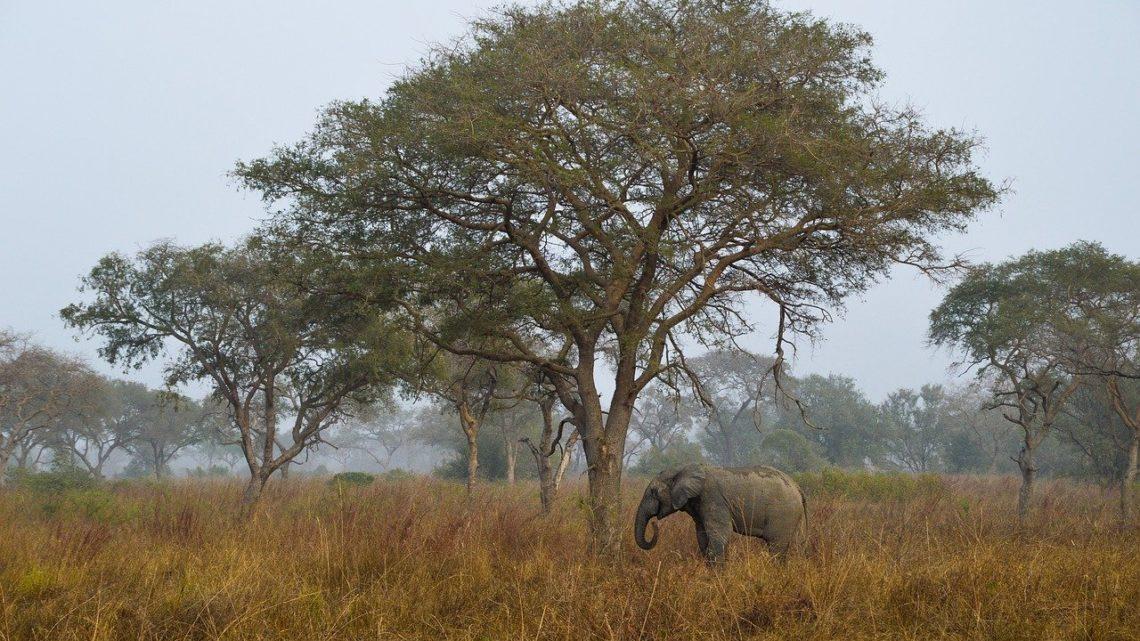 Les meilleurs parcs naturels d'Afrique de l'Ouest