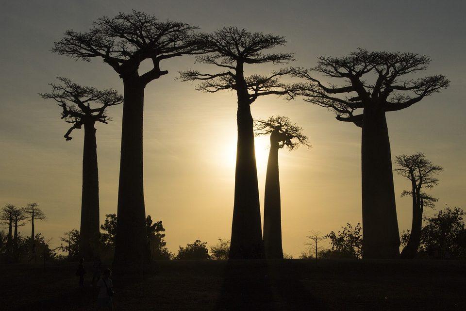 Madagascar : une île pas comme les autres