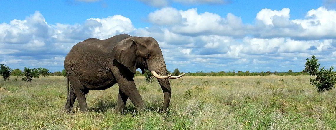 Afrique du Sud :  Parc National Kruger