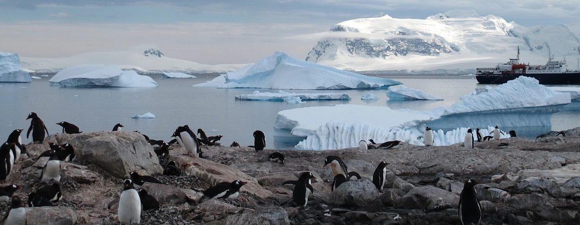 Comment préparer un voyage parfait en Antarctique