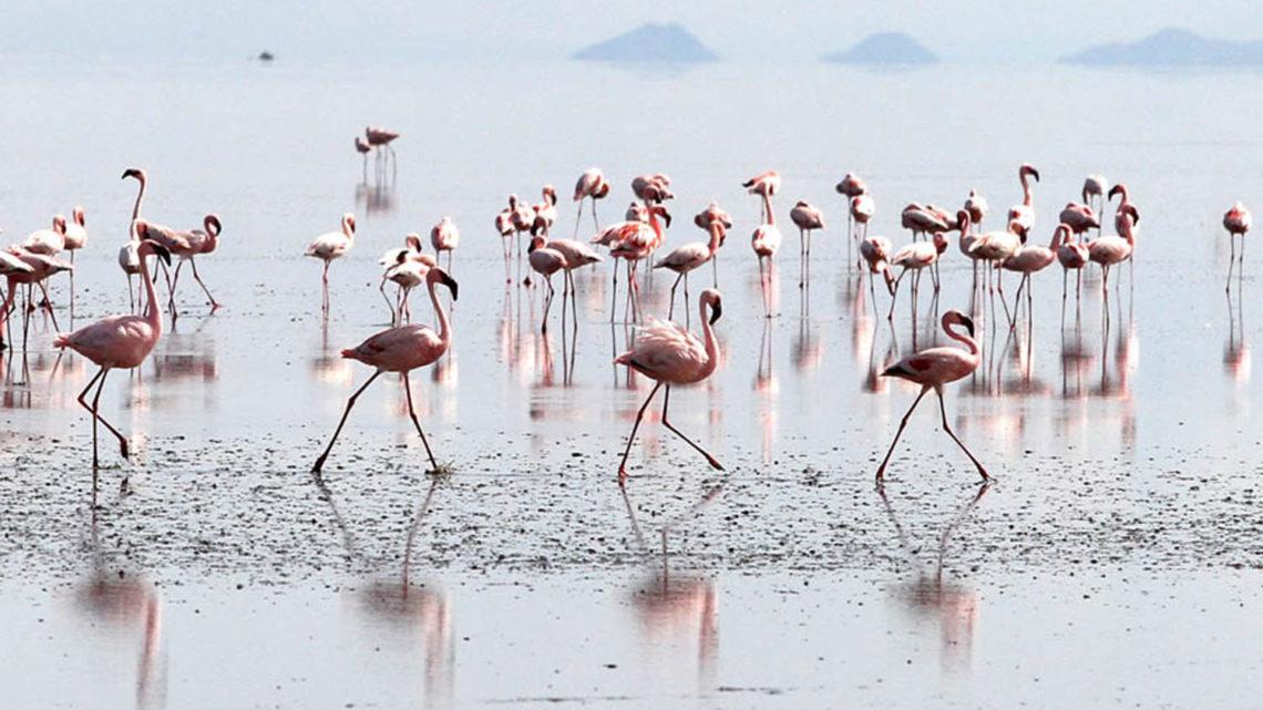 Les grandes migrations du monde naturel
